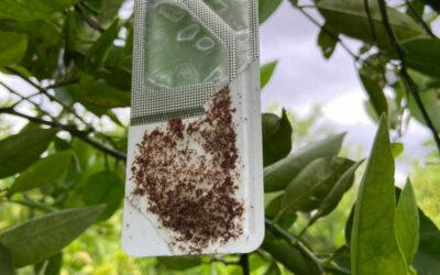 ASAJA Alicante gestiona el reparto de productos fitosanitarios para el tratamiento de la ceratitis para frutales