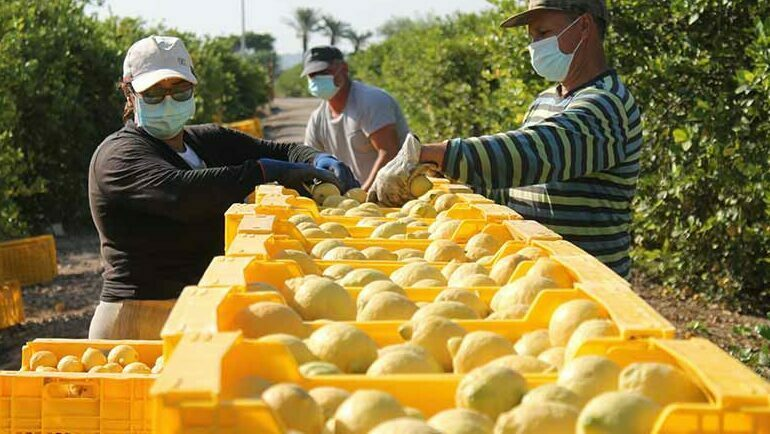 Cítricos limones