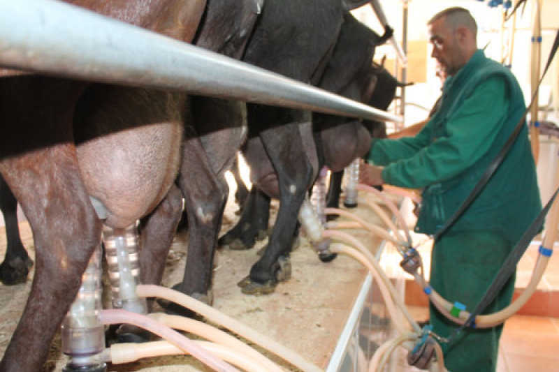 La ganadería, la primera gran víctima de la convergencia diseñada por el MAPA