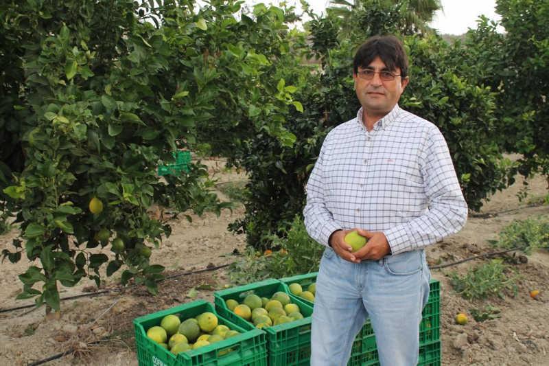 inicio campaña citricos