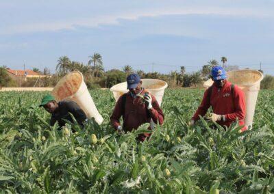 Operaciones Culturales en Agricultura (100% Online)
