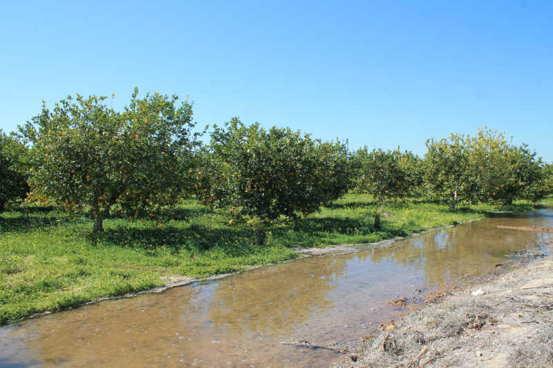 limoneros lluvias marzo
