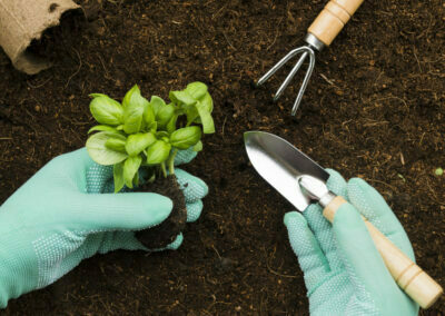 Material Vegetal para Siembra y Plantación en Agricultura (100%)