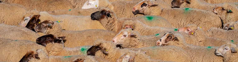 Sectorial gandaería